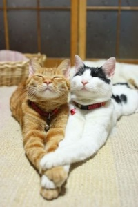 cats_in_love